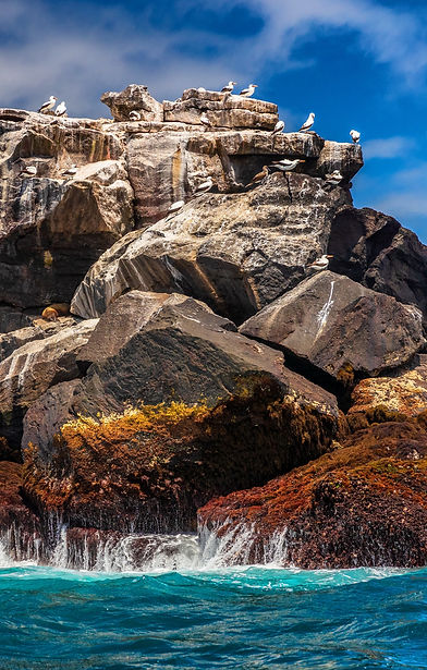 Galapagos%20nature%20landscape%20and%20a