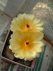 Cati  Flowers July.jpg