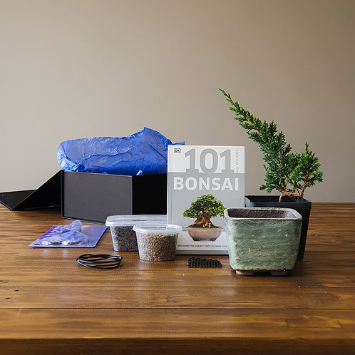 Premium Gift Box Bonsai Starter Kit with handmade pot