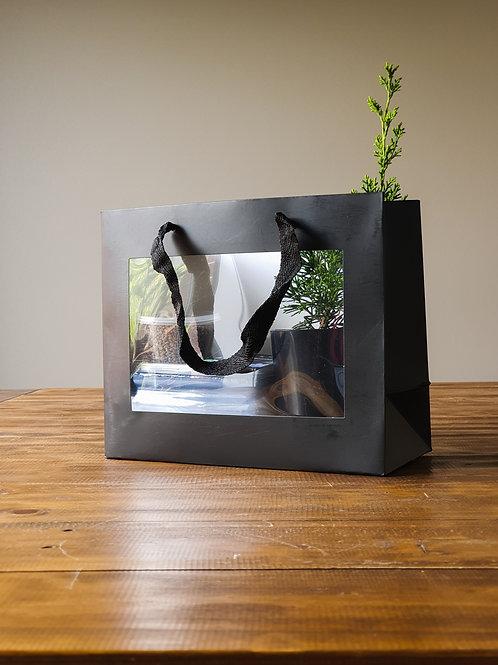 Boutique Gift Shimpaku Bonsai Starter Kit with Cherry Pot
