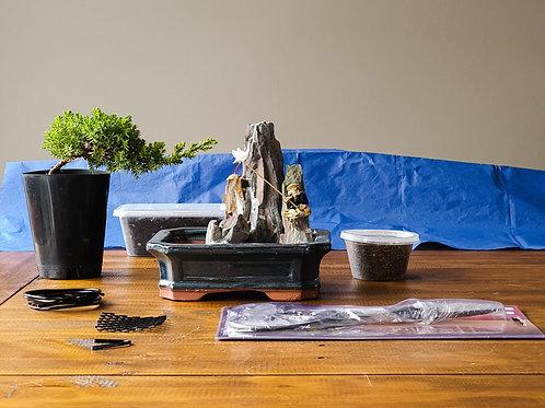Juniper Bonsai Starter Kit with Figurine Pot