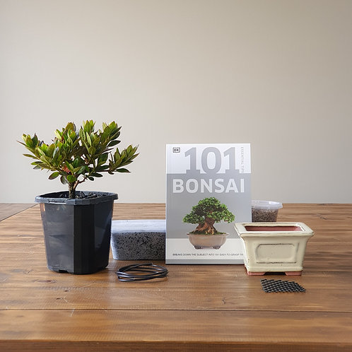Azalea (Ripples) Bonsai Starter Kit