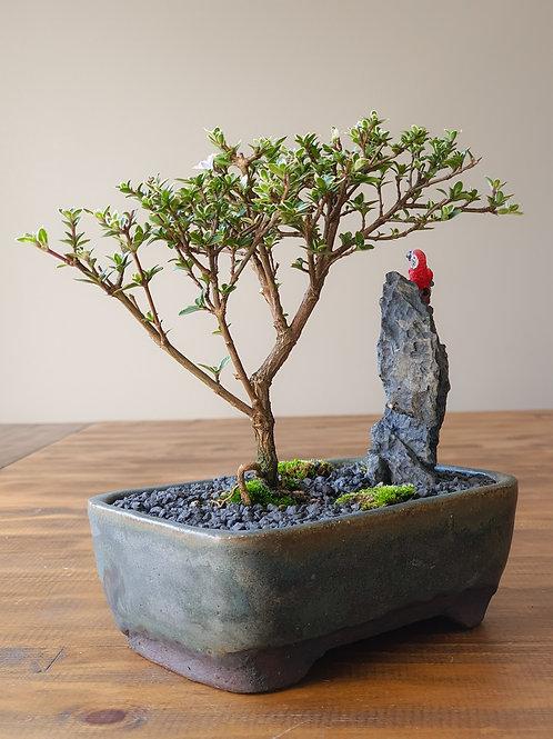 Serissa with figurine and handmade pot