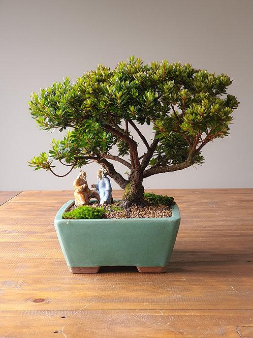 Advanced Saotome Azalea Bonsai with landscape & figurine