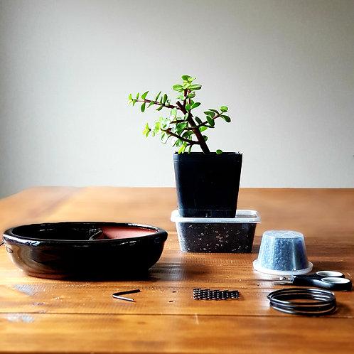 Dwarf Jade (Money Tree) Bonsai Kit + Fisherman Figurine and Pond Pot