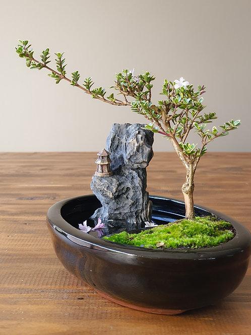Serissa with figurine, landscape, and pond pot
