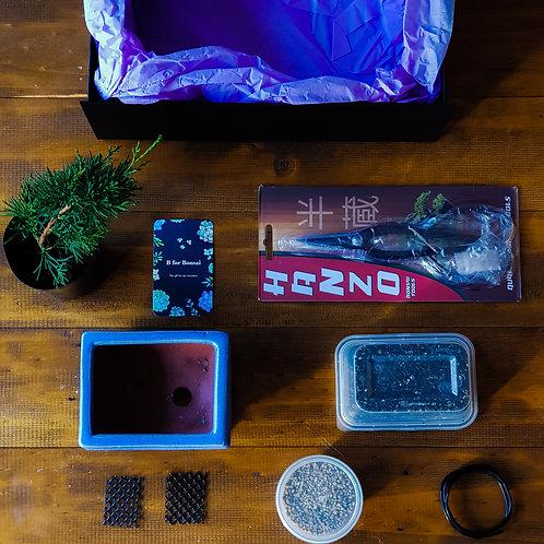 Shimpaku Bonsai Starter Kit with Lavender Pot and Premium Gift Box