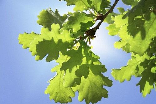 English Oak with primitive pot and landscape