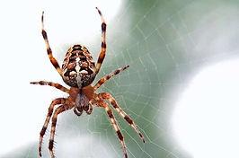 10 natuurlijke manieren om spinnen te verjagen