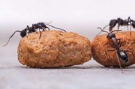 10 manieren om definitief van de mierenplaag af te komen