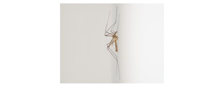suusmaaktschoon.nl | insecten bestrijden | wat te doen tegen muggen | tips tegen muggen | wat kun je doen tegen muggen