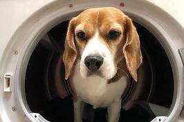 Mijn hond wassen voor een stankvrij huis, hoe doe ik dat?