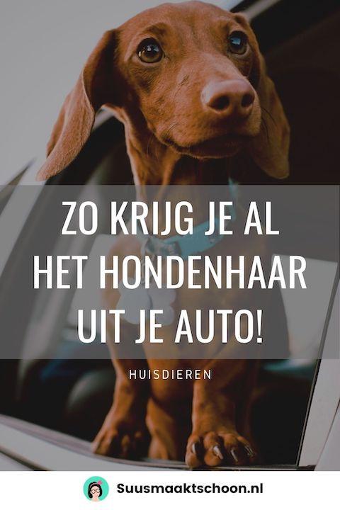 hondenharen verwijderen | honden haar verwijderen | interieur auto schoonmaken | handige tips huishouden | lifehacks | huisdieren