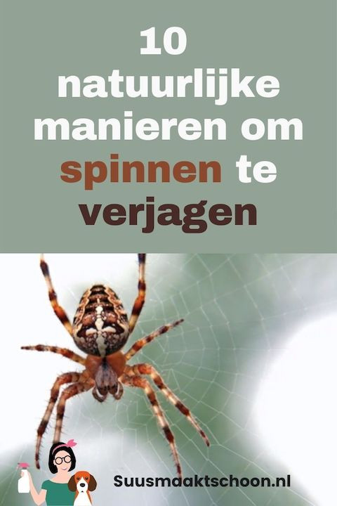 spinnen verjagen | spinnen bestrijden