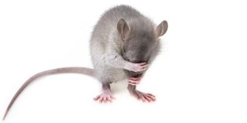 suusmaaktschoon.nl | ongedierte bestrijden | hoe kom je van muizen af | muizen verjagen