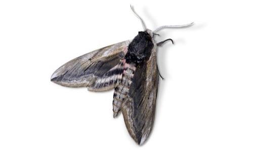 suusmaaktschoon.nl | insecten bestrijden | motten in huis | wat te doen tegen motten | motten in kleding