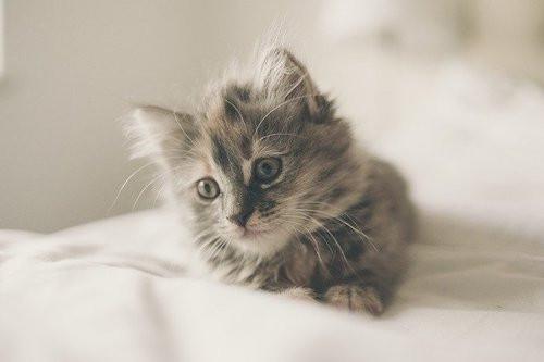suusmaaktschoon.nl | suus maakt schoon | hondenharen | kattenharen | hondenharen verwijderen | kattenharen verwijderen | dierenharen verwijderen | kattenharen wasmachine | hondenharen van kleding verwijderen | kattenharen van kleding verwijderen | dierenharen van kleding verwijderen | kattenharen uit wasmachine | verwijderen kattenharen | hondenharen uit kleding | kattenharen wasgoed | kattenharen kleding