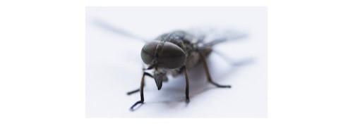 suusmaaktschoon.nl | insecten bestrijden | wat te doen tegen vliegen | wat te doen tegen maden | wat helpt tegen vliegen | wat te doen tegen vliegen in huis