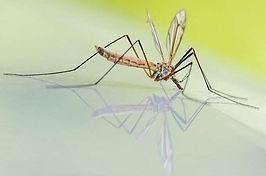 De beste oplossing ooit om insecten en ongedierte te weren