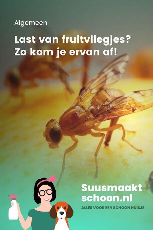fruitvliegjes bestrijden | fruitvliegjes vangen | fruitvliegjes val | middel tegen fruitvliegjes | wat te doen tegen fruitvliegjes | tips tegen fruitvliegjes | last van fruitvliegjes | fruitvliegjes verjagen | val voor fruitvliegjes