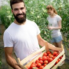 Tony's Tomatoes