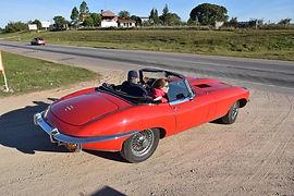 Jaguar Paulus Elberse 2.jpg