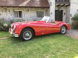Jaguar 1.JPG