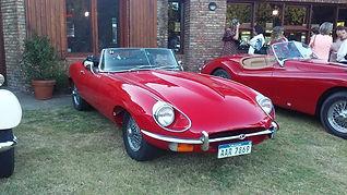 Jaguar Paulus Elberse.jpg