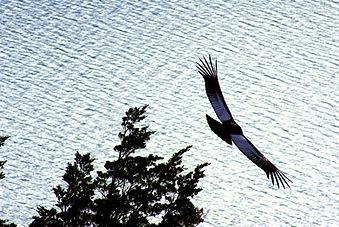 Condor01.jpg
