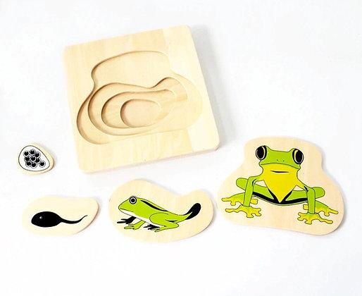 Montessori Frog Life Cycle Puzzle