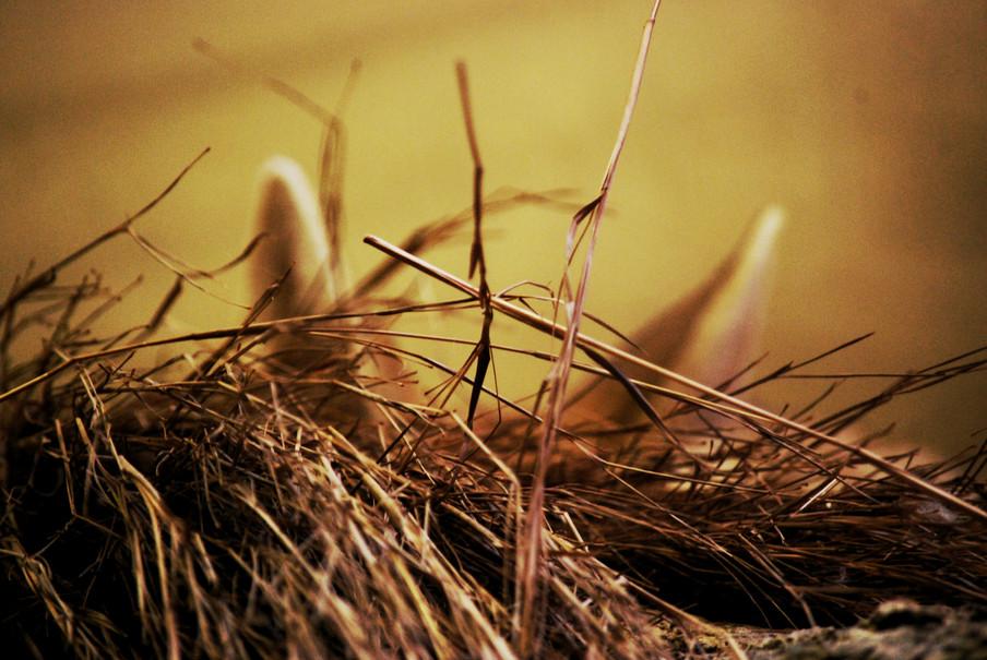 a fox nest.jpg