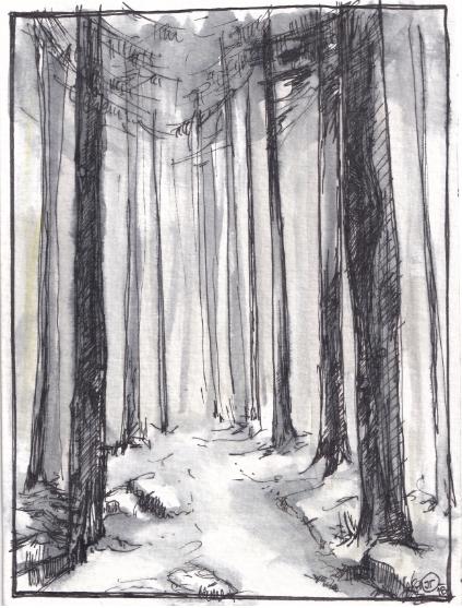 Forest in Krkonose mountain