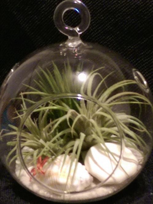 Globe Terrarium w/ AirPlants