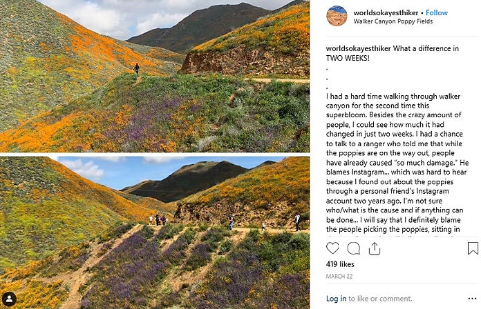 2019 superbloom damage before and after