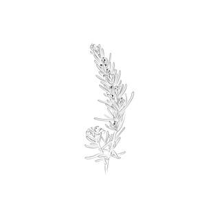 flowering-rosemary.jpg