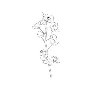 floweringcrabapple-01-01.jpg