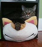 amanda_cat.jpg