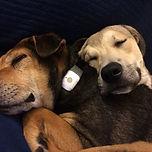 jenn_dogs.jpg