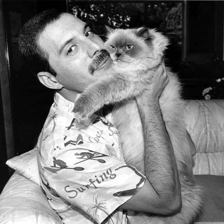 Il viaggio nella vita di Freddie
