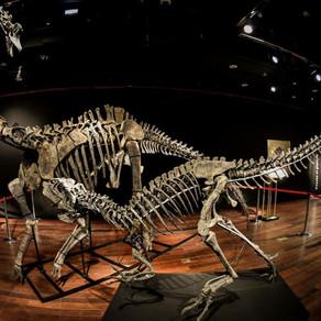 Enchères : à quel prix se sont vendus les deux squelettes de dinosaures ?