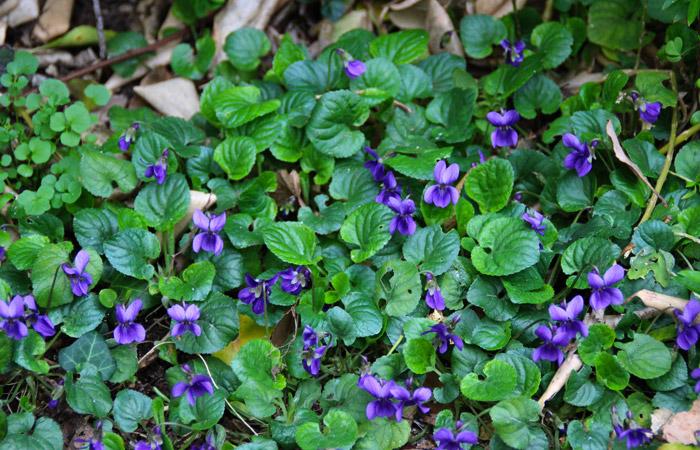 La Spatule, le jardin