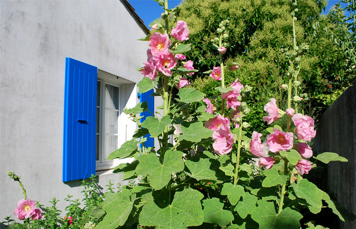 Le Courlis, le jardin