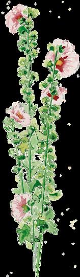 La Guillaumette, roses tremières, aquarelle Mary Falière
