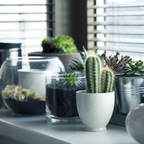 How to Create a Healthier Home With Nature's Help