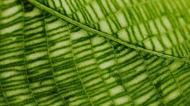 Chlorophylle et santé pour Maison Jacynthe