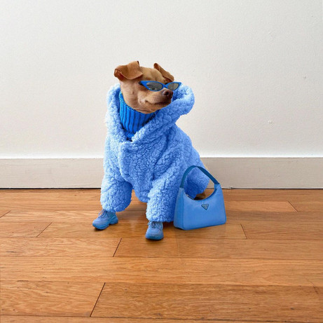 The Best-Dressed Dog on Instagram: @Boobie_Billie's Chicest Looks