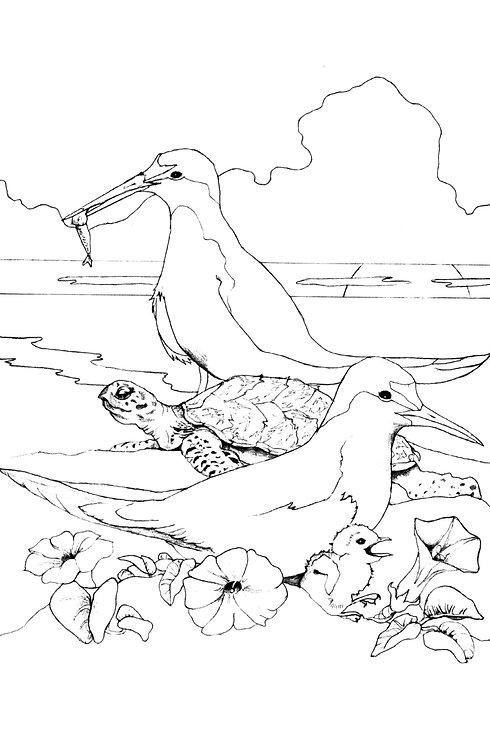 CPP Least Tern & Mr. Hawksbill