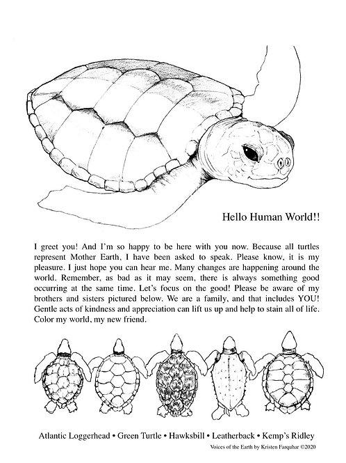 CPP Florida Sea Turtles