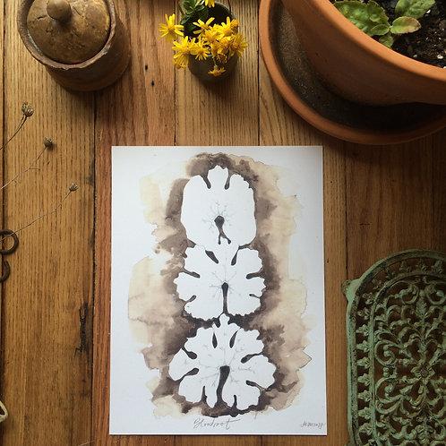 Bloodroot Leaves (archival print)