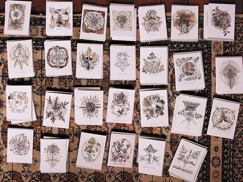 Wild Appalachian Herbs /// greeting card package ///